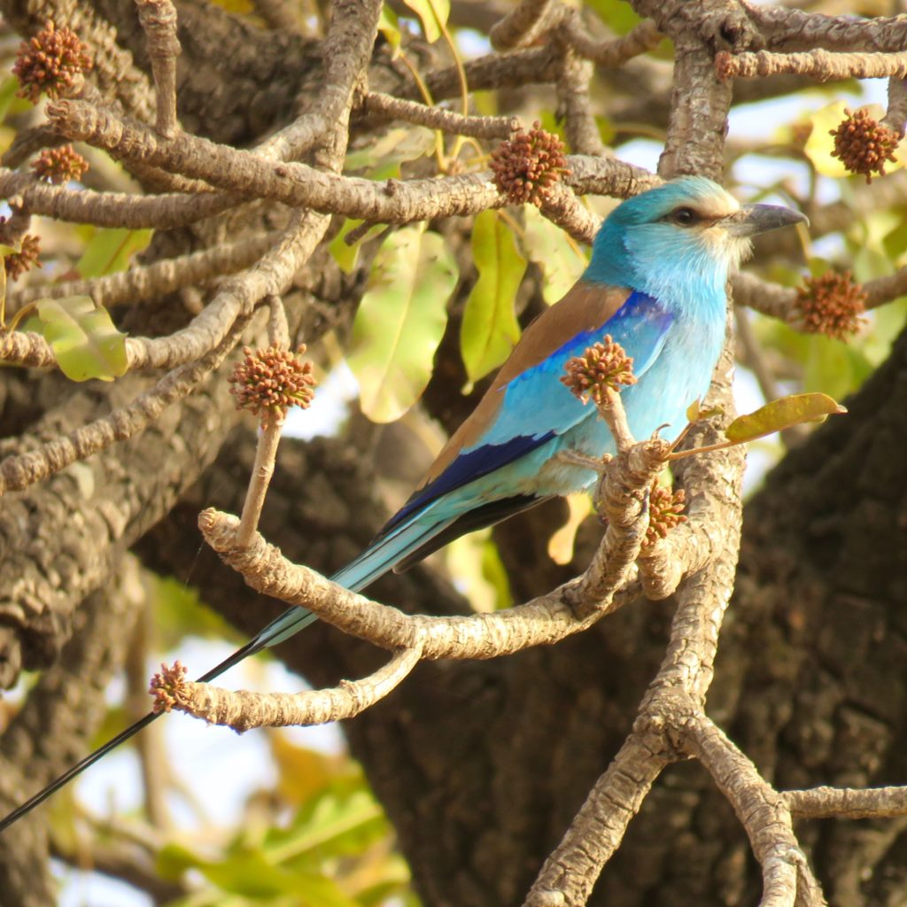 Burkina Bird